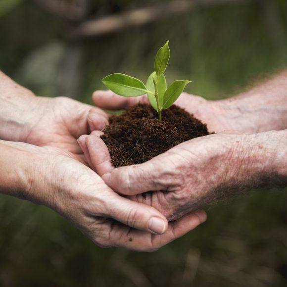 Especial Dia Mundial do Meio Ambiente
